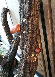 椎茸の原木栽培